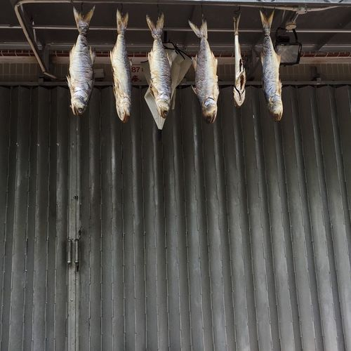 Low angle view of dried fishes hanging against shutter