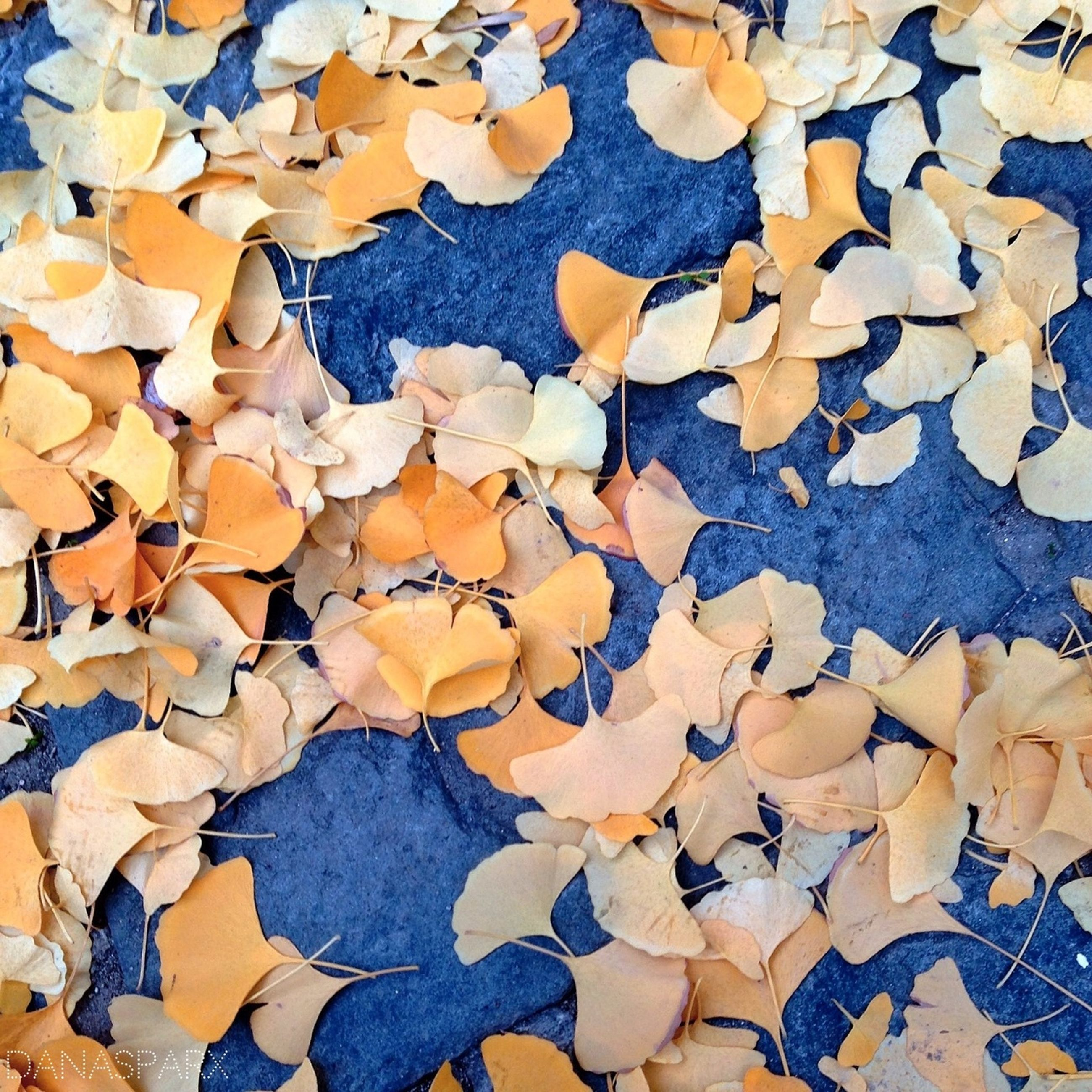 full frame, backgrounds, autumn, abundance, change, large group of objects, leaf, dry, textured, high angle view, season, pattern, leaves, fallen, day, outdoors, no people, nature, natural pattern, close-up