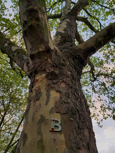 Low Angle Low Angle View Wood Metallic Metal Sign Tree Bark Tree Branch  Letter B Alphabet Metal Metal Sign B Leaves Leaves🌿 Clouds Pink Sky Nature Decoration Little Venice London Tree Branch Tree Trunk Close-up Bark Single Tree