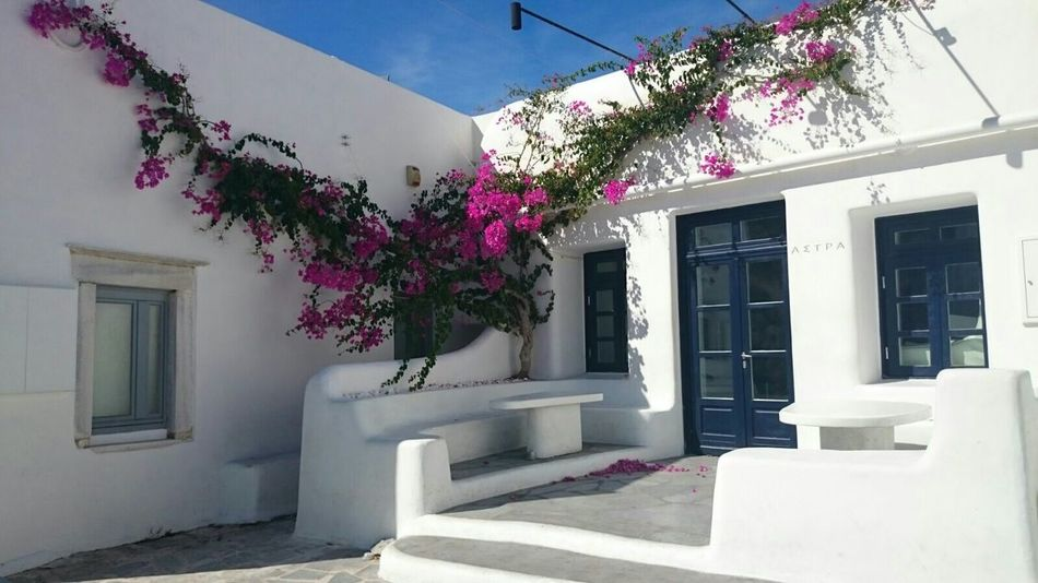 The Purist (no Edit, No Filter) Mykonos Throughmyeyes Traveling Travel Photography Vacation Beautiful Life Capturing Freedom Nice Atmosphere Enjoying The View Thats Life Natural Beauty From My Point Of View Hello World Check This Out Mobilephotography In Front Of Me Flowerporn Urbanphotography Urban Lifestyle Urban Architecture Buganvilla Relaxing Time Walking Around Discovering