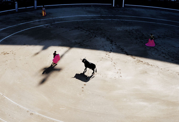 High angle view of matadors in ring with bull