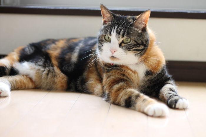 Cat ねこ Pet ひなたぼっこ 久々に投稿しました皆様お久しぶりっす( ̄^ ̄)ゞ