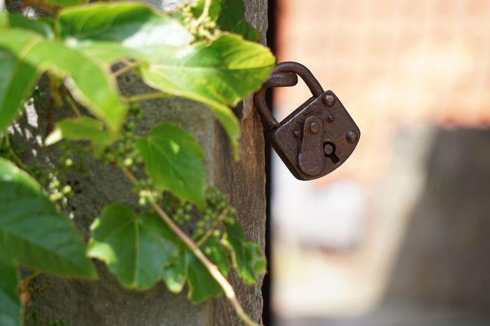 Lock n load! EyeEm Selects Day Lock Old Selective Focus Rusty Metal