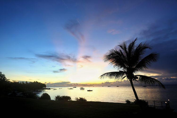 꿈만 같던 아침 일출 . . #하루한컷 #신행추억 #필리핀 #보홀 #에스카야리조트 #일출 #5DMARK4 #신계륵 #EF2470F28LIIUSM Tree Water Sea Palm Tree Sunset Multi Colored Beach Blue Silhouette Shadow