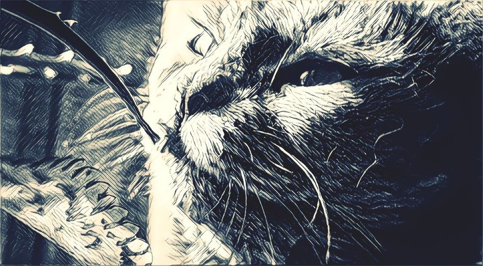 Кто этот кот) Deylord First Eyeem Photo