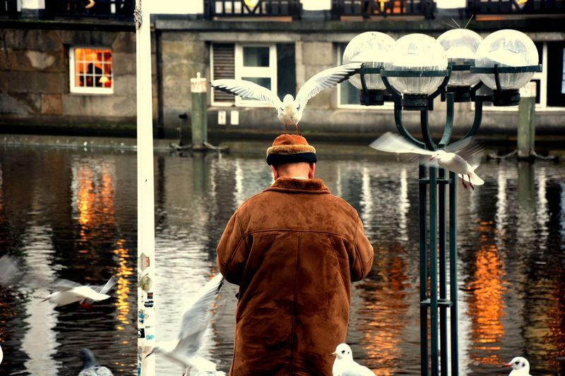 Seagull perching on man standing by canal in city