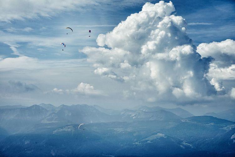 Bird Aerobatics