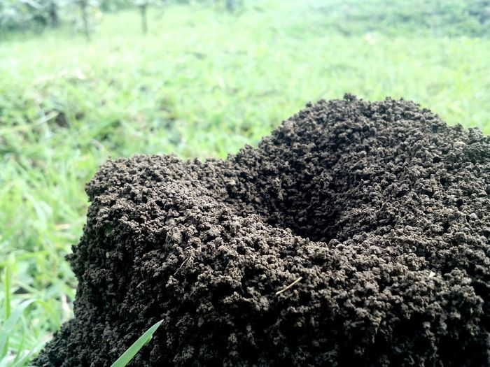 Ant Hill Colony