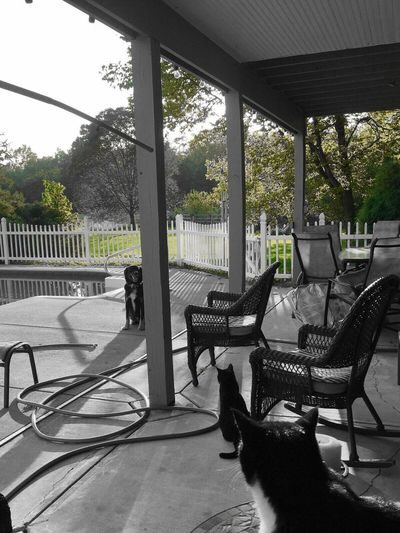 Ohio, USA Lewisburg, Ohio Poolside Pool Cats Dog Animals Ohio Outdoors Color Filter Green Color