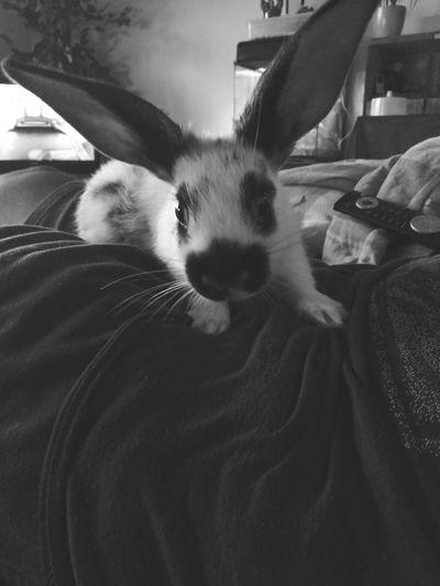 Große Liebe ❤️ Haustiere Hasenpower Hasenglück AnimaLs <3 Baby Animals Einundalles grosse liebe shopy