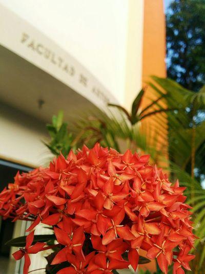 Flowers Focus Bright Colors Eye4photography  Uasd Facultad De Artes Uasd Artes UASD By Sunlight
