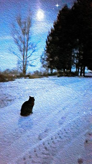 Under A Tabby Moon, cat, Animal Themes One Animal Winter Outdoors Nature Sky The Week On EyeEm Pet Portraits NatureTree Night, Evening, Moonlight, Moon, Tranquil,pet