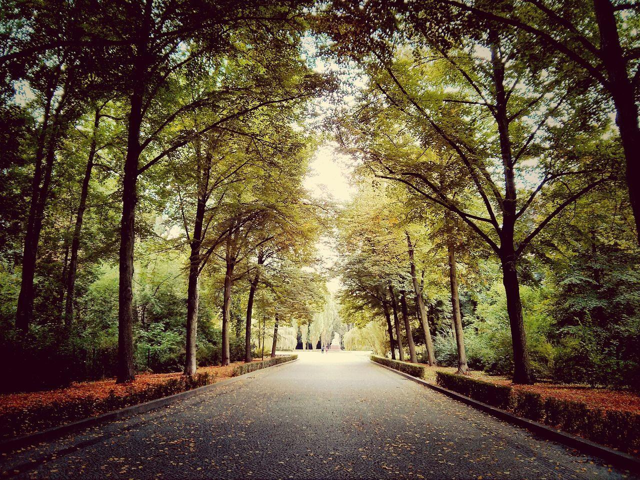 Scenic shot of treelined empty road