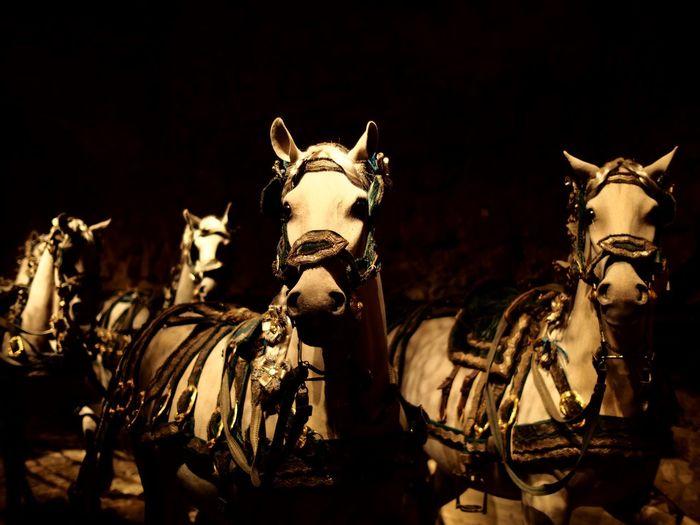 At the museum Livrustkammaren Museum Gamla Stan The Swedish History History History Museum  Horses Horse Photography  Horse Stuffed Animals Bokeh Bokeh Photography Bokehlicious Bokeh Love Shallow Depth Of Field