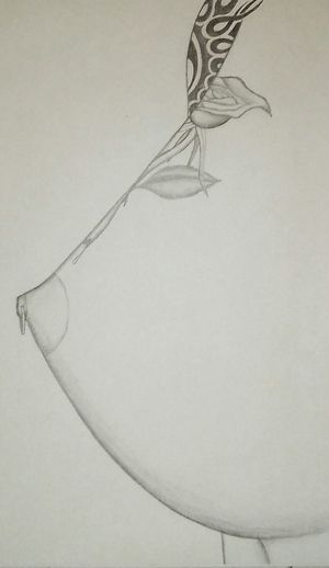 Black And White Photography Pencil Sketch  Handdrawn Pencil Drawing Sketch Of The Day Body Curves  Tatoo Art