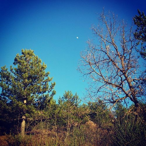 Primavera Laquila Spring Moon lunasunsole