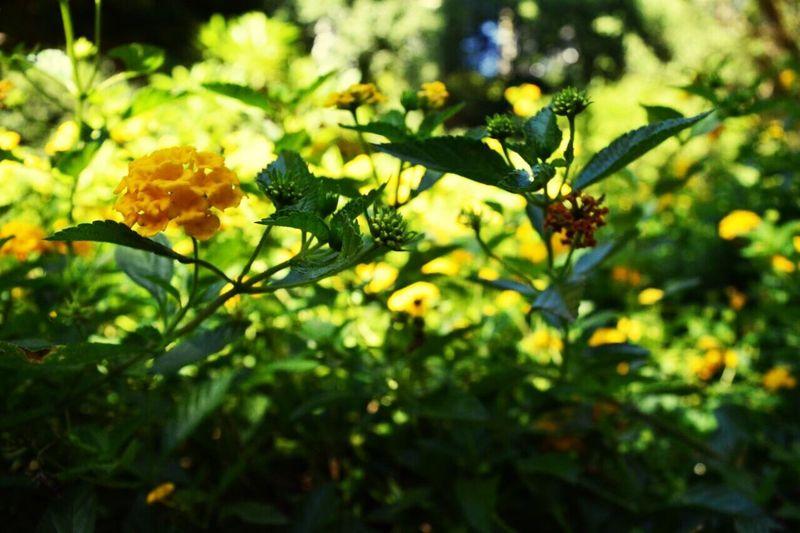 Fotografia Da Natureza Flores Argentina