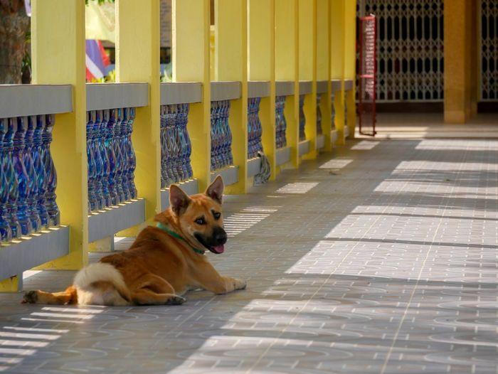 Portrait of dog sitting on tiled floor