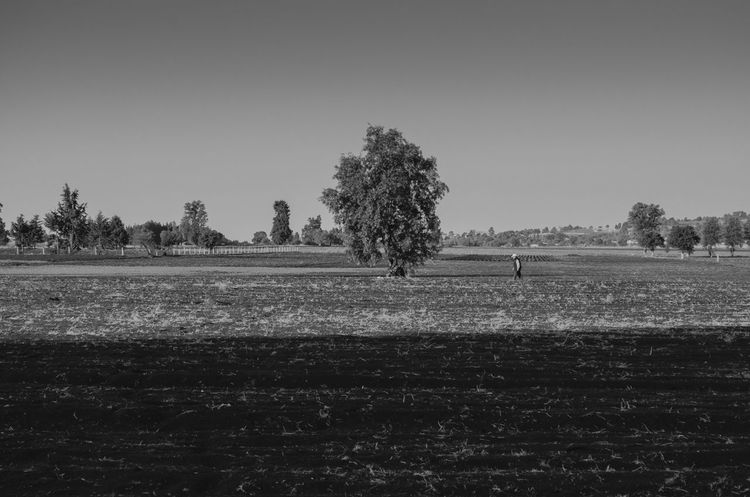 Campesino mexicano. 🇲🇽 Agriculture Tree Field Farm Rural Scene Landscape Nature Outdoors Growth No People Sky Day Beauty In Nature Plowed Field The Week On EyeEm Lost In The Landscape