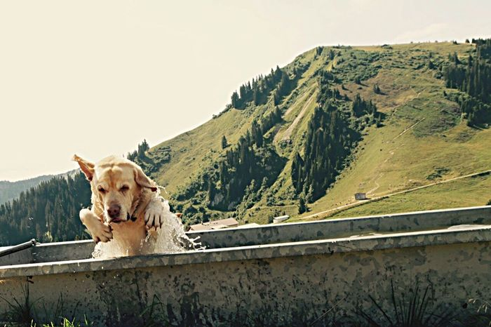 Doggy day. Dog Dogslife Dogs Of EyeEm mountain One Animal