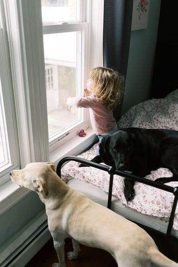 Dog looking away while sitting on window at home