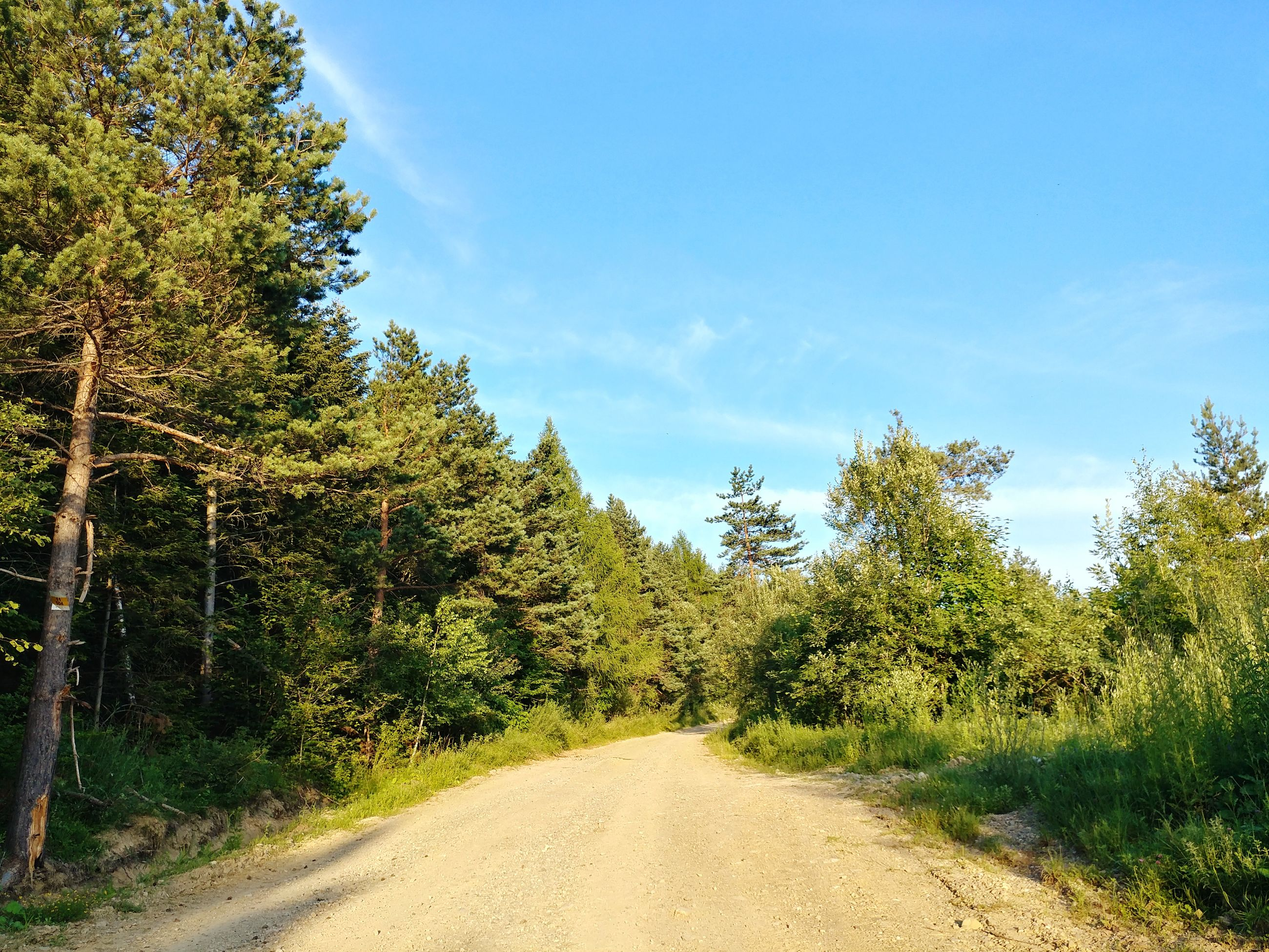 tree, plant, road, sky, the way forward, direction, transportation, beauty in nature, nature, growth, non-urban scene, day, tranquility, green color, diminishing perspective, no people, tranquil scene, cloud - sky, sunlight, dirt, outdoors