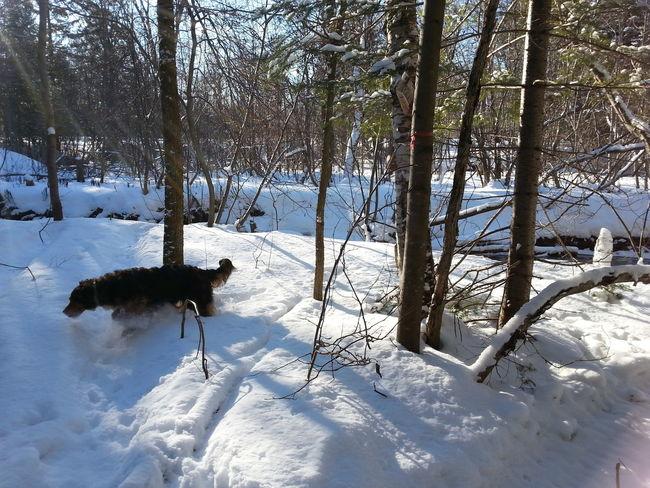 Dog Sunny Day Snow ❄