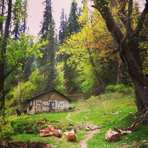 Abbottabad Nathiagali Northernareaspakistan Miranjani KPK pakistan awesomeplace naturalbeauty trees hills mountain trekking hiking travel