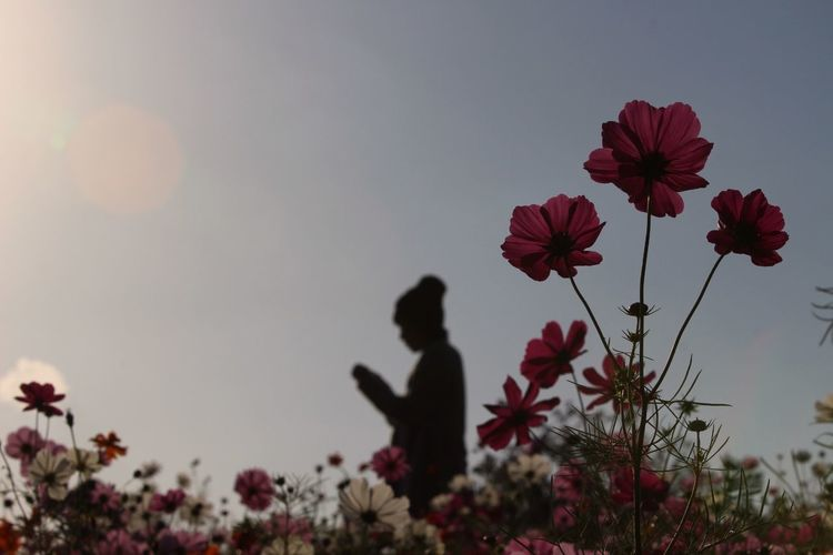 Model Silhouette Flowers at Osaka-shi,Japan