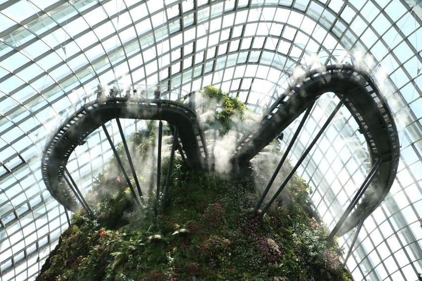 Indoors  Built Structure Architecture Break The Mold Steel No People Modern Greenhouse Gardens By The Bay Cloud Forest 3XSPUnity Art Is Everywhere The Purist (no Edit, No Filter) EyeEmNewHere Singapore Nature Travel Travel Destinations Mist Cloud Forest Dome Modern Architecture Growth Sunlight Treetopwalk Just admire, no words needed Neighborhood Map