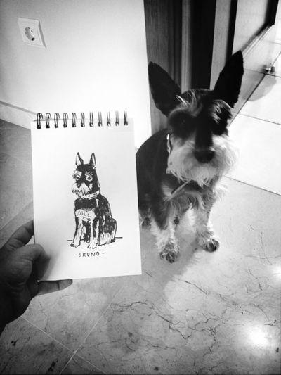 Bruno Dog portrait Drawing