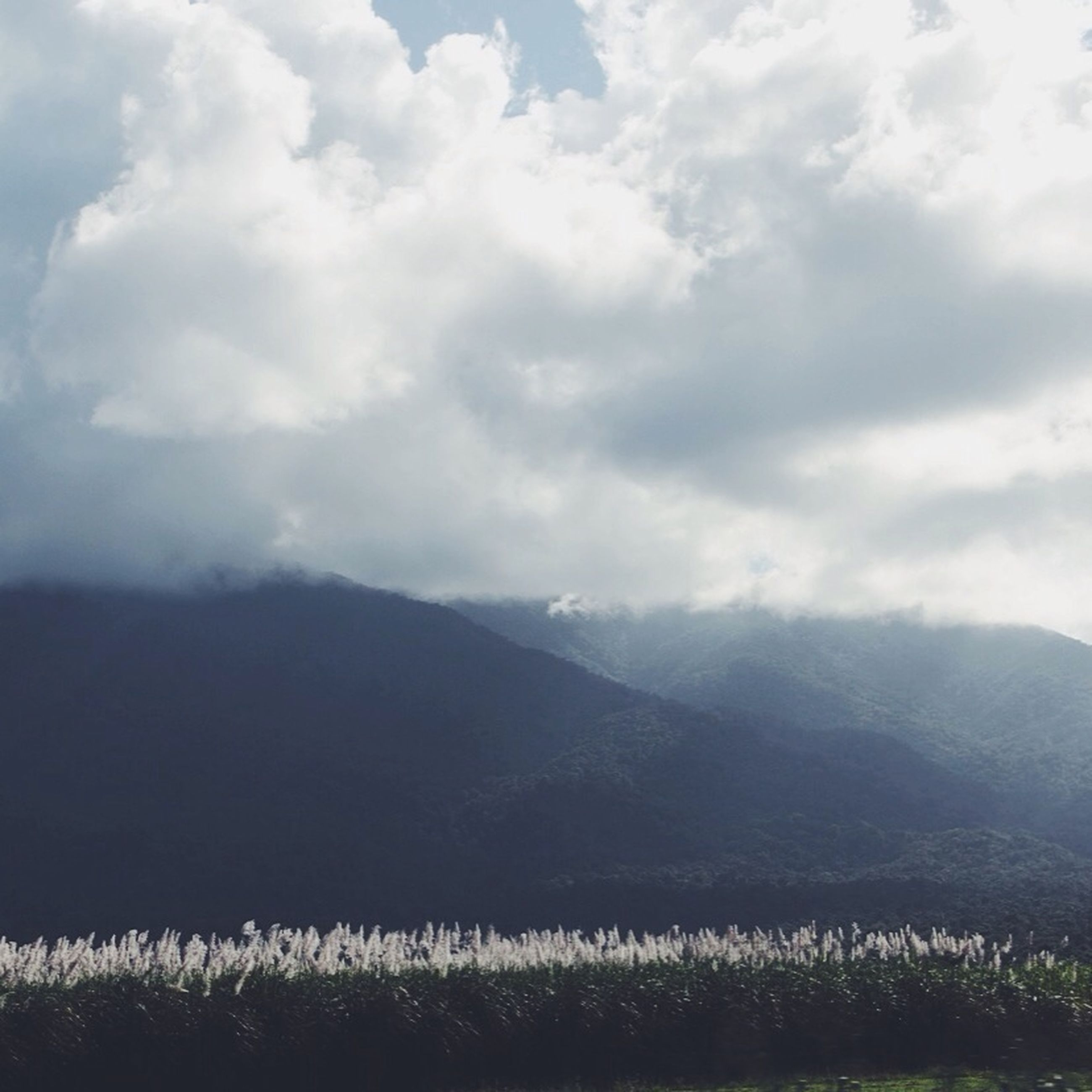mountain, tranquil scene, sky, tranquility, landscape, scenics, beauty in nature, mountain range, cloud - sky, nature, cloud, cloudy, non-urban scene, idyllic, field, growth, remote, plant, horizon over land, outdoors