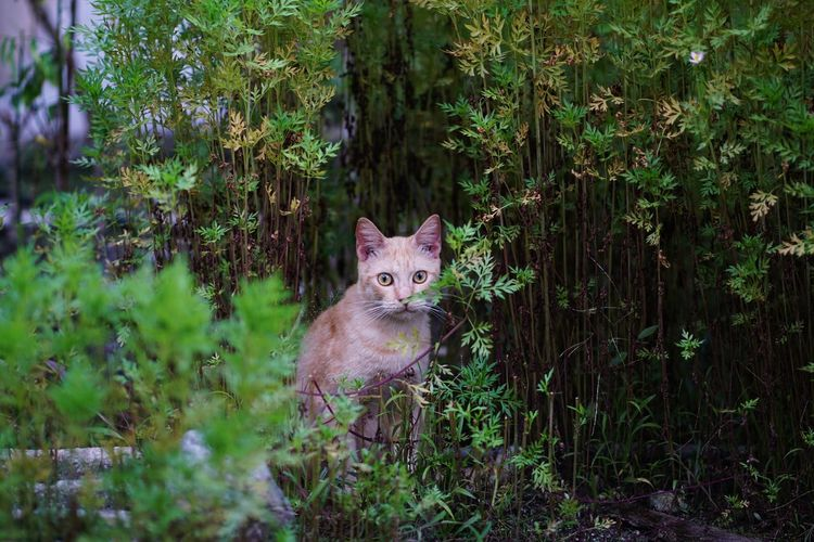 EyeEmNewHere Garden Green Color Tree Trunk Leaves Leopard Portrait Grass Plant Cat Whisker Stray Animal Ginger Cat Domestic Animals Yellow Eyes At Home Pets Feline Domestic Cat Animal Eye Kitten Tabby Cat Tabby