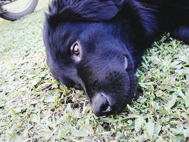One Animal Domestic Animals I Love It ❤ Dog Photography