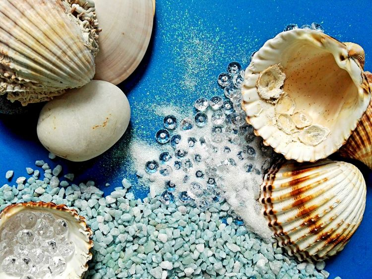 Sea shells holuday background Blue No People Close-up Table Shells🐚 Shellsheddyphotography Shells Shell Blue And White Background Blue And White Holiday Souvenirs Sea Souvenir Sea Shell Seashell Colored Background EyeEmNewHere