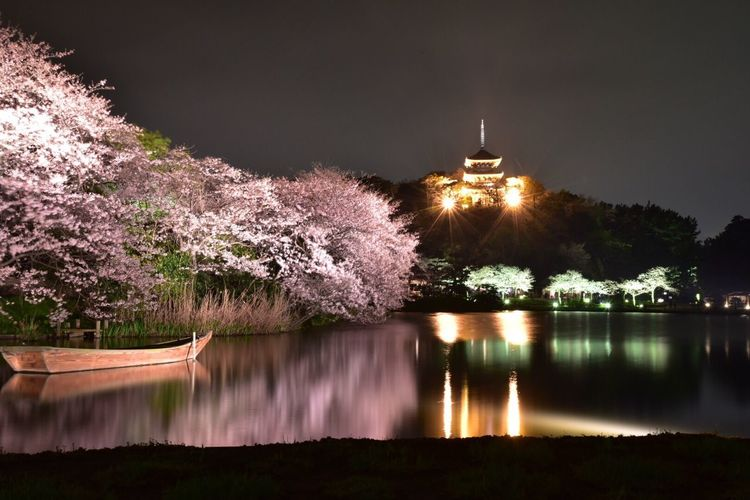 Nature Photography Flowers Snapshot Flower Collection Japan Colors Spring Flowers Snapshots 桜 Cherry Blossoms Yokohama Night View Landscape #Nature #photography Nightscape Snapshots Of Life Landscape_photography 三渓園