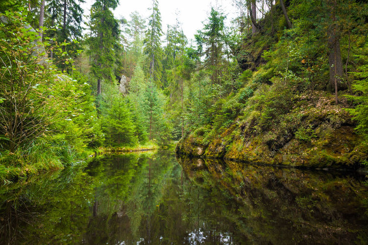 Adršpach Adršpachské Skály Beauty In Nature Day Forest Green Color Growth Lake Mountain Nature No People Outdoors Reflection Rock - Object Scenics Sky Tranquil Scene Tranquility Tree Water