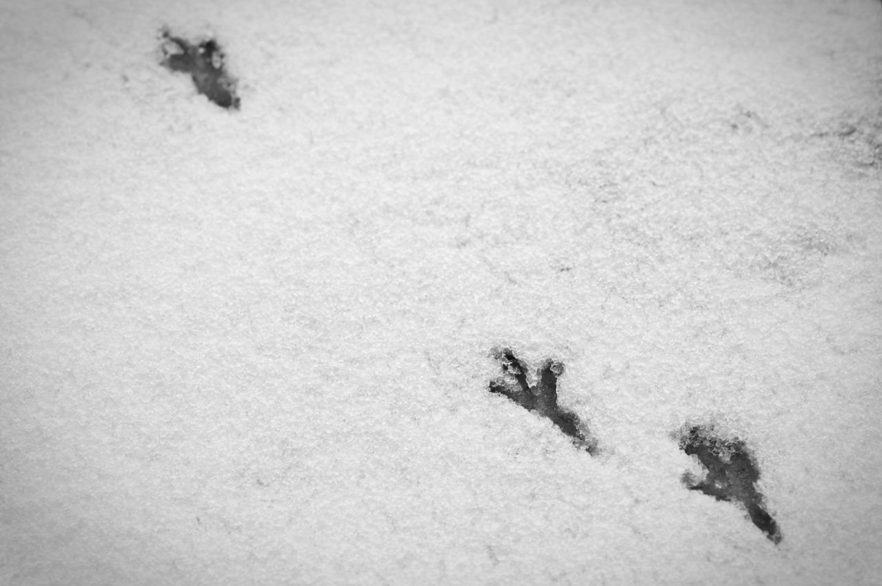 High Angle View Of Footprints On Frozen Field