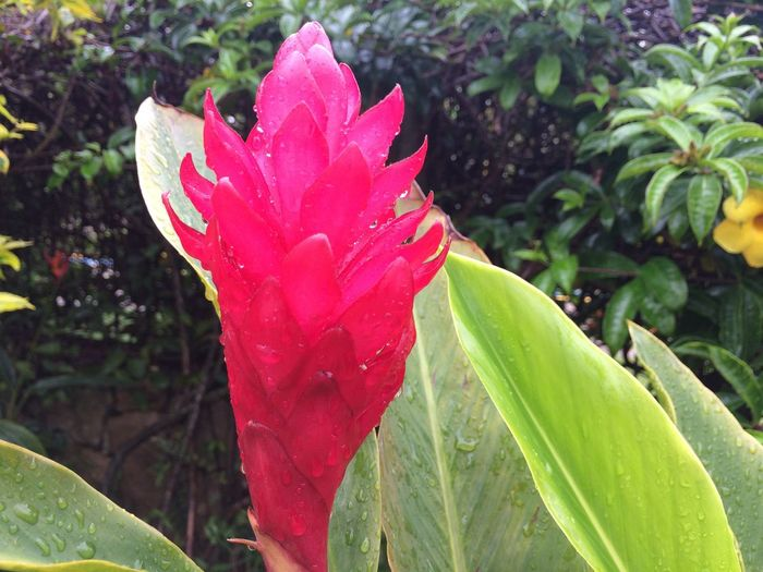 Red water Plant Growth Beauty In Nature Leaf Plant Part Close-up Flowering Plant