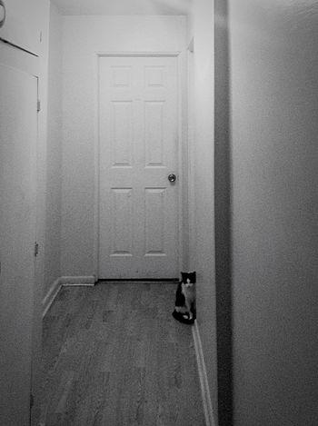 IPadography Cat Feline Kitty Love Katze Ink361 Waiting Blackandwhite