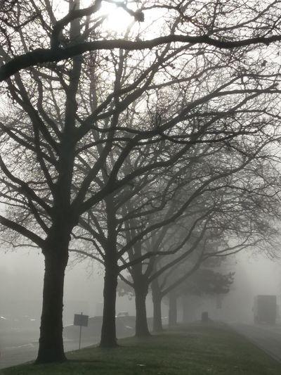 Fog Tree Social