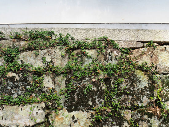 Ishigaki where grass grew (草が生えた石垣) Ad Beautiful Copy Space Daytime Green Japan Background Background Material Black Color Close-up Gray Landscape Margin Material Nature No People No Person Nobody Outdoors Plant Rock Stone Wall Text Space Wall White