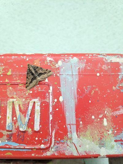 Moth Bored