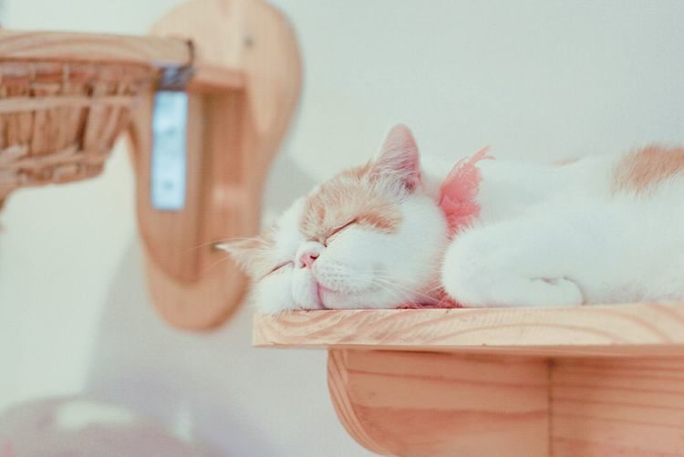 Catlovers Cats Of EyeEm Caturday Catsagram Cat♡ Cat Photography Catcafe Domestic Cat Day Domestic Animals No People Indoors