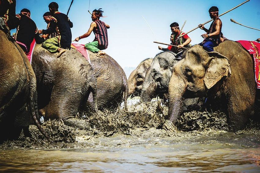 Elephant race Elephant Vietnam Vietnamese Culture People Popular Photos TriShot TriShot Photography Life Hello World