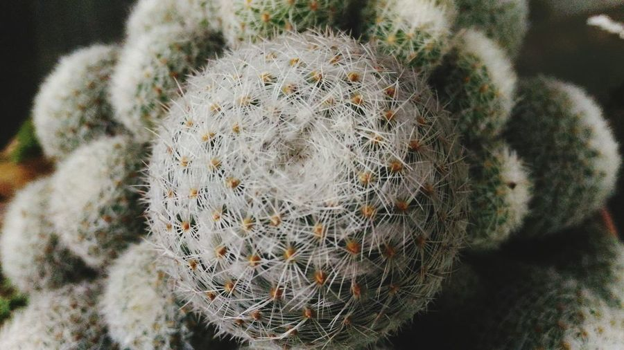 Nature High Angle View Close-up Outdoors Grass No People Day Tree Ring Beauty In Nature Cactus