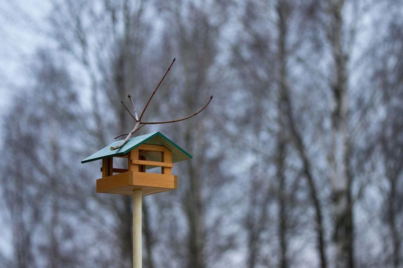 Tree Birdhouse
