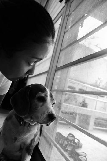 Shades Of Grey Blackandwhite Black And White Black & White Dog Beagle Beaglelovers Ilovemydog Frommyview
