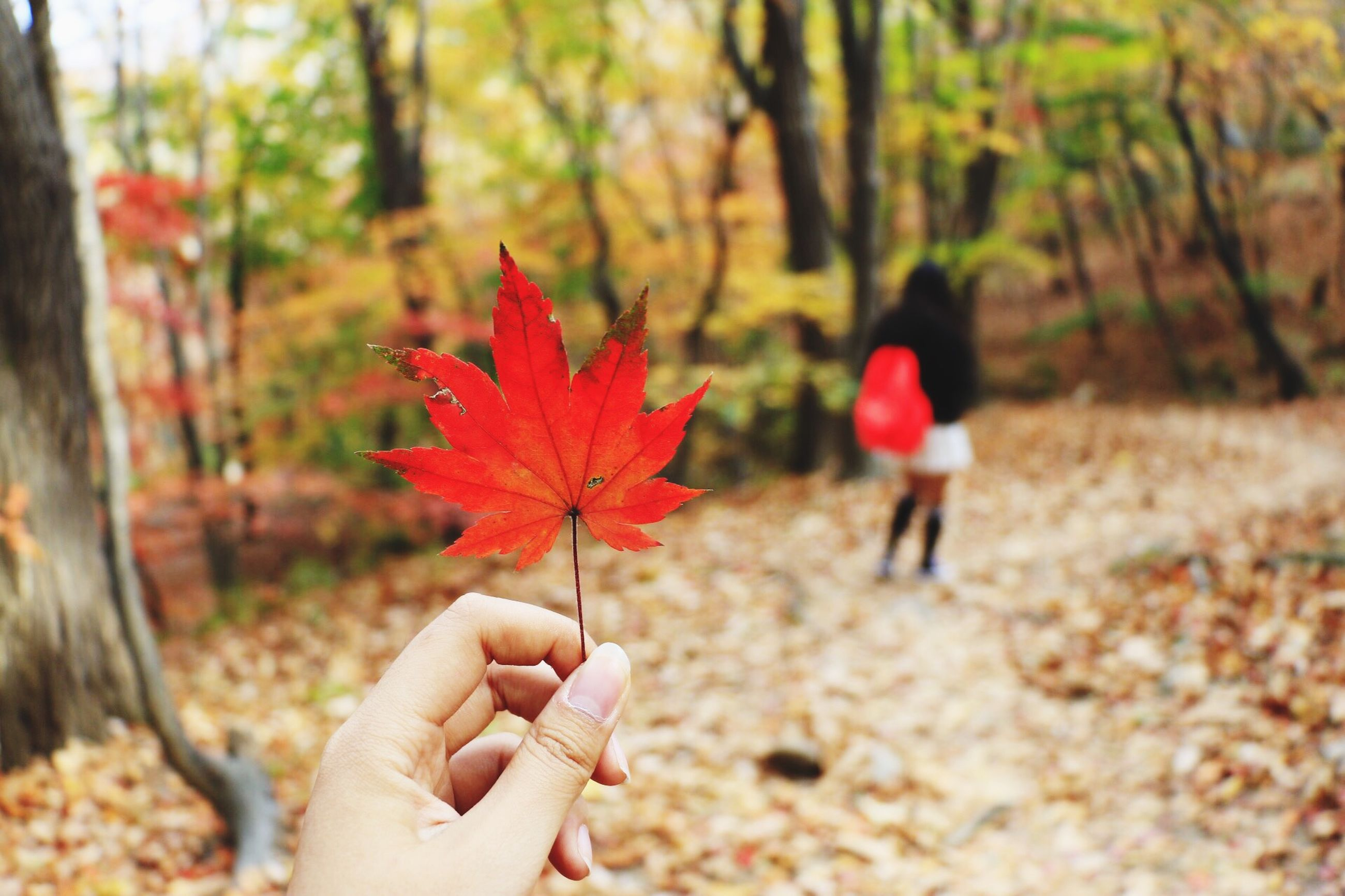 person, focus on foreground, lifestyles, holding, unrecognizable person, autumn, red, leisure activity, part of, change, leaf, tree, season, cropped, human finger, personal perspective