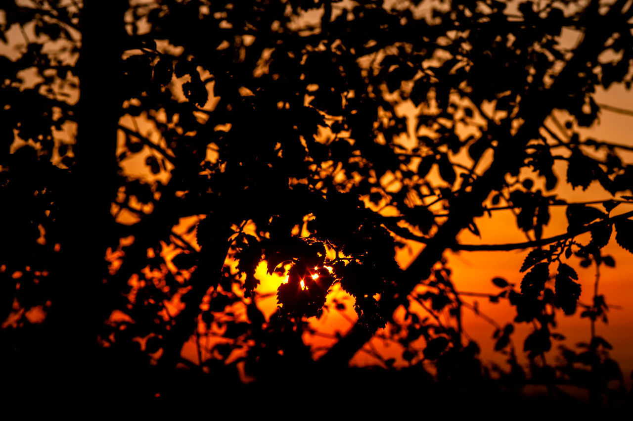 CLOSE-UP OF SILHOUETTE TREE AGAINST SKY AT SUNSET
